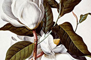 Exhibition: Birds, Bugs and Blooms: Observing the Natural World in the 18th Century