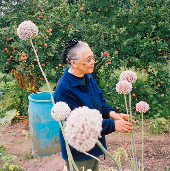 Andrew Buurman, from the portfolio Allotments, 2009