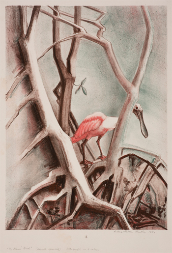 The Flame Bird, Roseate Spoonbill, 1952