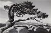 Natural Abstraction: Brett Weston and His Contemporaries