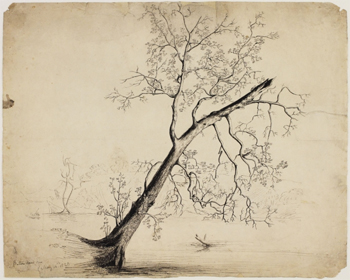 Button Wood Tree, 1823
